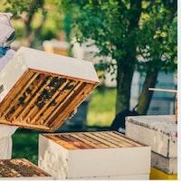 Accessoires de ruches